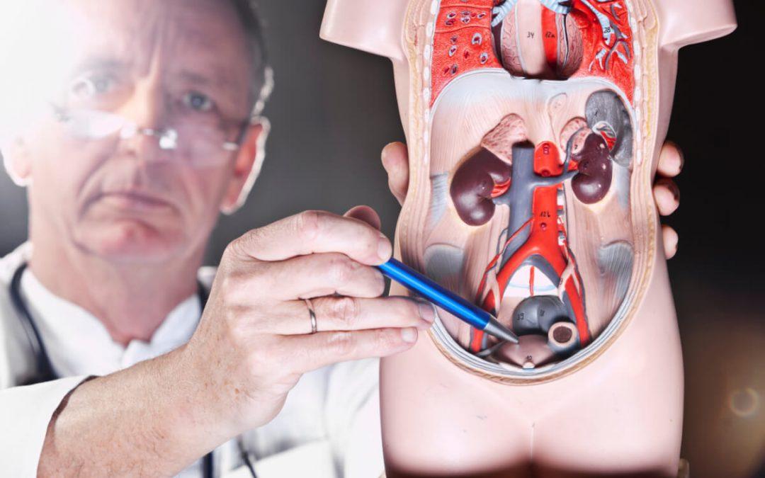 Quando consultar o médico urologista?